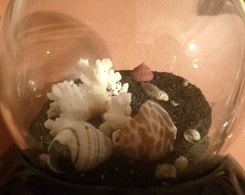 Glass jar filled with seashells, coral, and black sand