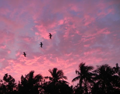 Sunrise Sky in the Florida Keys