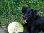 Lucy with a Frisbee