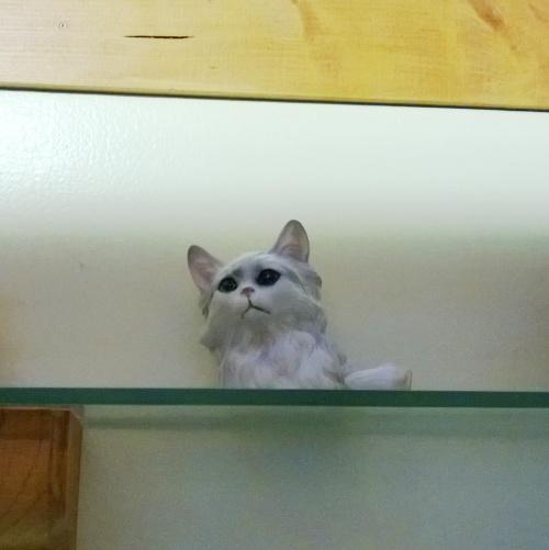 White Kitty's Head